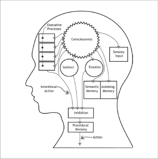 Functional diagram of the brain. (This schematic of the