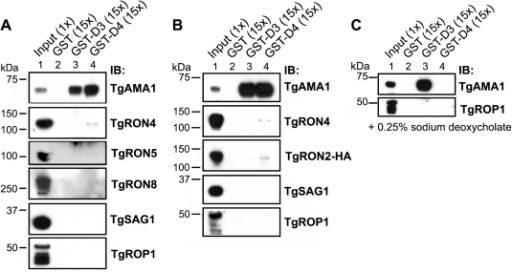 ppat-1001282-g003:The C-Terminus of Toxoplasma RON2