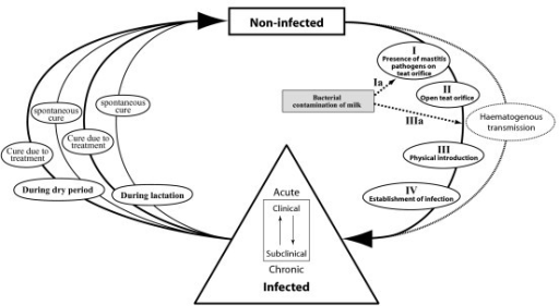 Figure 3:A HACCP-based approach to mastitis control in