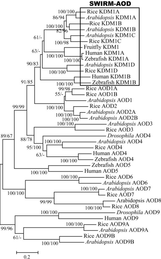 Phylogenetic tree of AOD genes from representative plan
