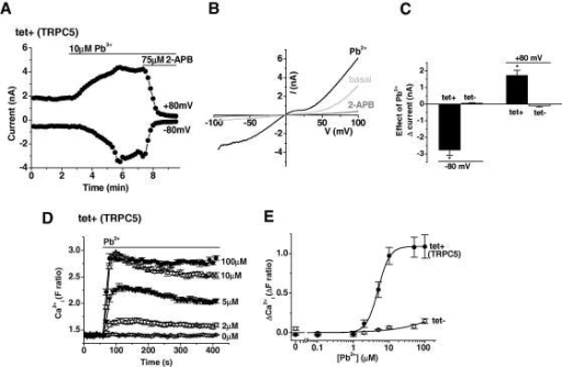 Pb2+ stimulates TRPC5 channels. Data from whole-cell vo