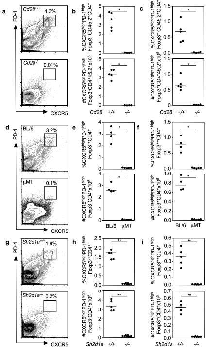 TFR require the same differentiation cues as TFH cells