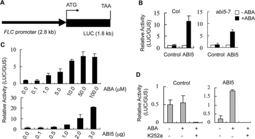 ABI5-triggered FLC promoter activity is associated with