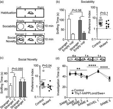 fig03:Thy1-hAPPLond/Swe+ mouse model of Alzheimer's