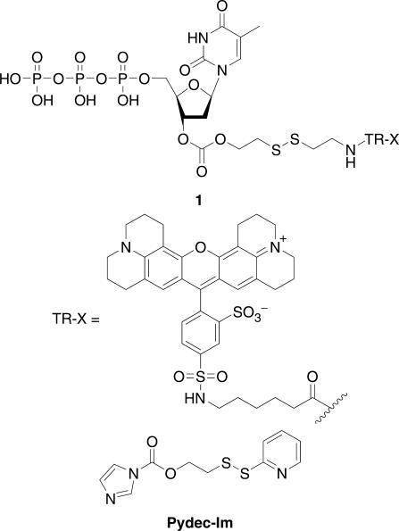 Figure 1:A new class of cleavable fluorescent nucleotides