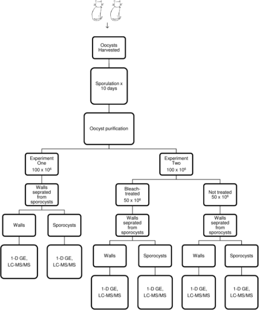 Flow chart showing experimental design for sample colle