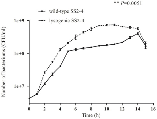 Growth curves of wild-type and lysogenic SS2-4 strains