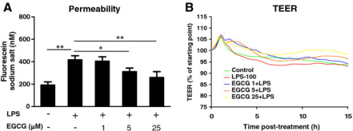 Effect of (−)-epigallocatechin gallate on the permeability