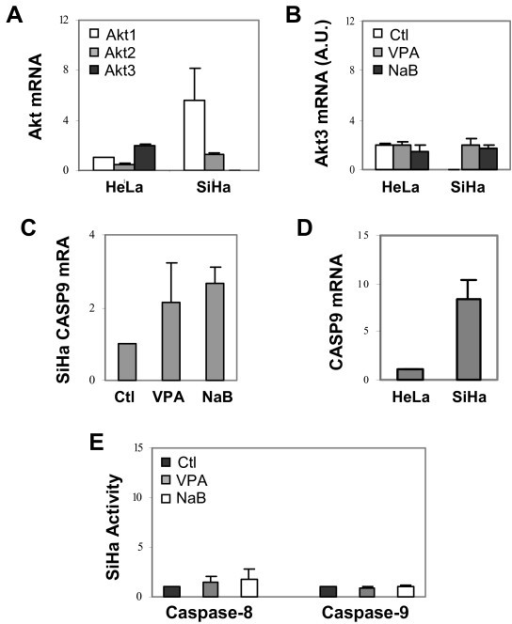 The Akt mRNA levels and caspase activities of the SiHa