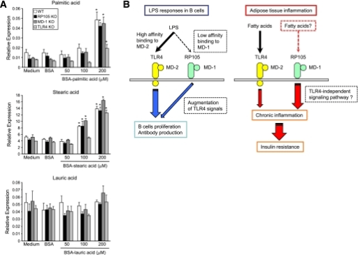Palmitate activates TLR4 but not RP105/MD-1 signaling