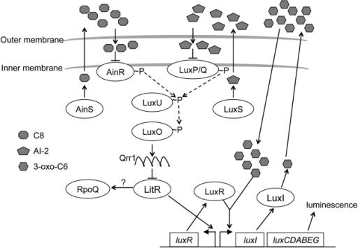 fig1:The Novel Sigma Factor-Like Regulator RpoQ Controls
