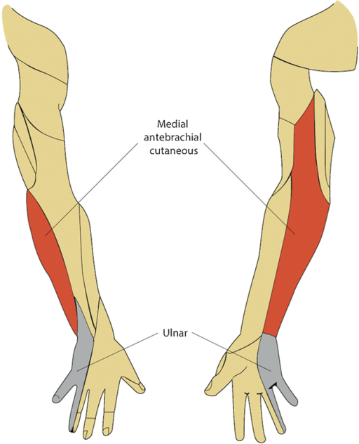 ulnar nerve diagram thermostat wire of the sensory distributions medial ante open i antebrachial cutaneous and nerves at posterior