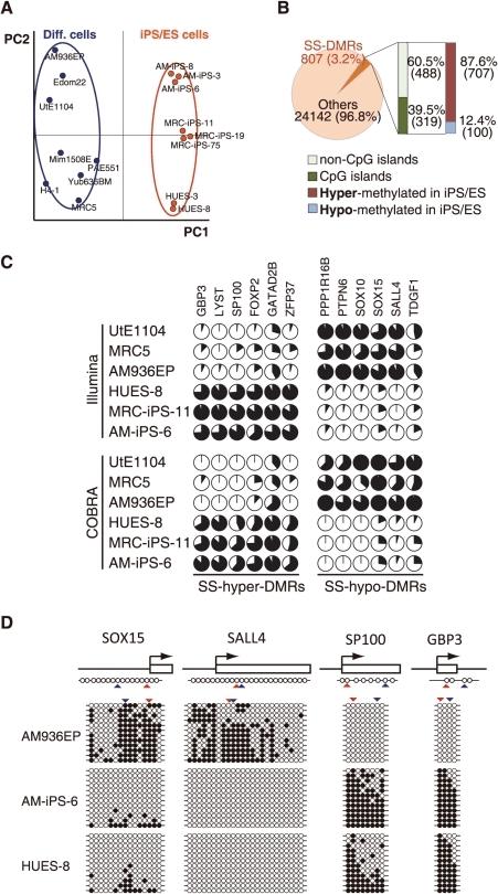 pone-0013017-g002:Defining Hypo-Methylated Regions of Stem