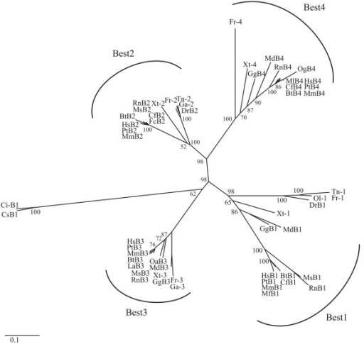 Figure 1:Molecular evolution and functional divergence of