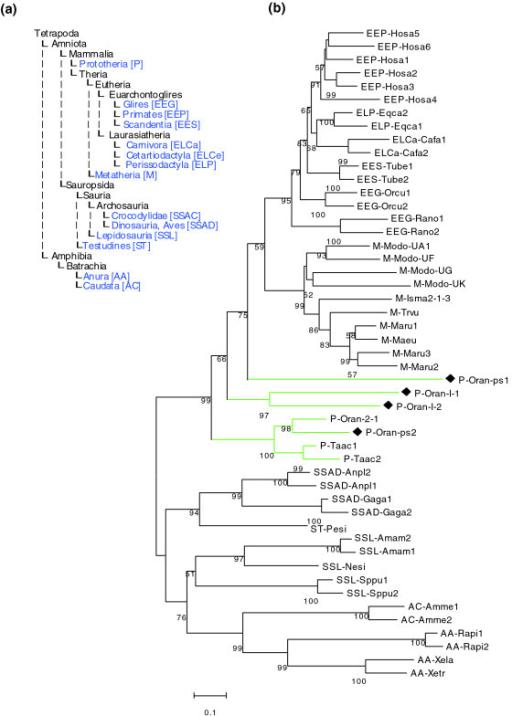 Figure 4:Disruption and pseudoautosomal localization of