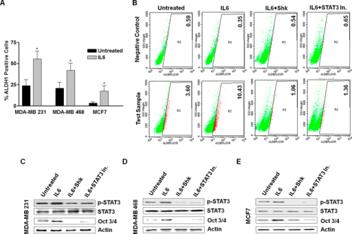 STAT3 activation status and its effect on cancer stem c