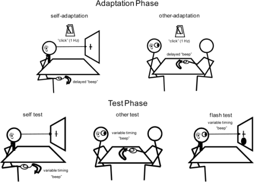 Description of the adaptation phase and the test phase