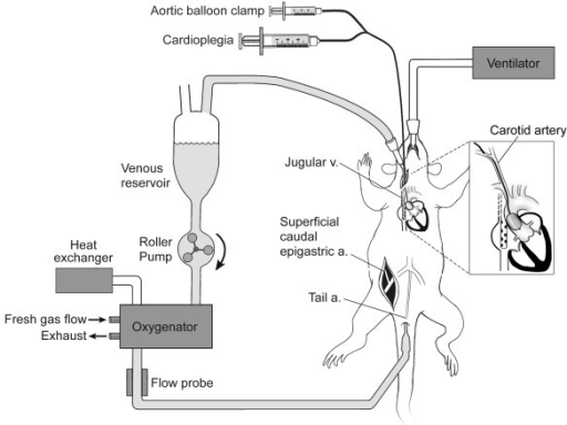Schematic diagram of rat CPB apparatus and surgical pre