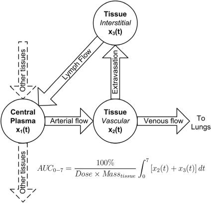 Diagram of physiologically-based pharmacokinetic (PBPK