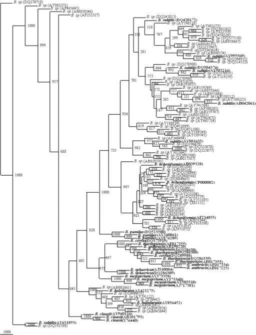 Phylogenetic tree of 34 framework sequences (bold value