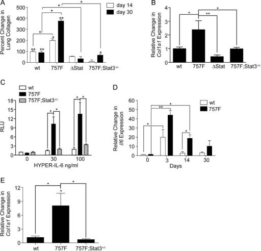 Gp130-mediated Stat3 signalling stimulates collagen acc