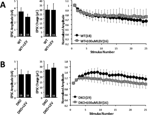 pone-0029560-g004:Levetiracetam Reverses Synaptic Deficits