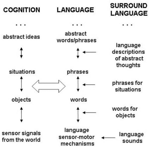 The dual hierarchy. Language and cognition are organize