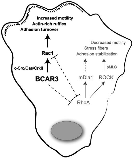 pone-0065678-g008:Breast Cancer Antiestrogen Resistance 3