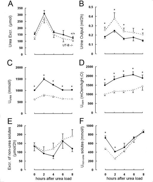 Figure 2:UT-B-deficient mice develop renal dysfunction and