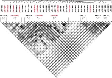 Haplotype analysis of the KCNJ3 gene. Haplotype structu