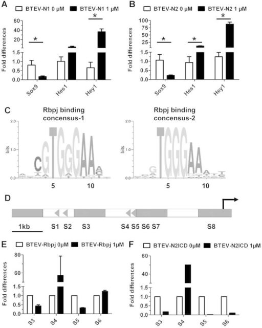 fig06:Notch gain of function inhibits chondrocyte