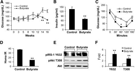 Insulin sensitivity in butyrate-treated mice. A: Fastin
