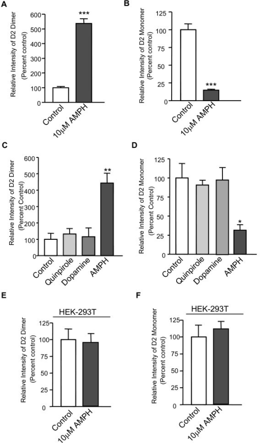 Amphetamine facilitates D2R dimerization in rat striatal