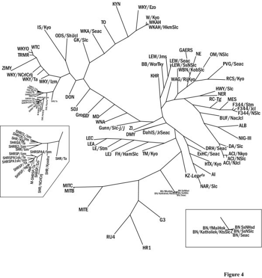 A family tree of 93 inbred rat strains. A phylogenetic