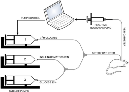 Schematic configuration of the experimental setup.The s