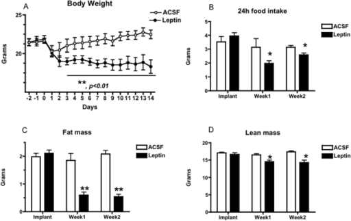 Body Weight, Food Intake, And Body Composition In Lepti