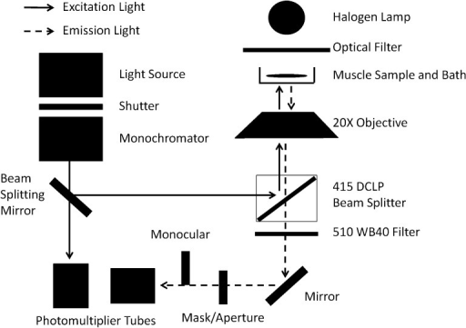 Optical path for excitation and emission light during e