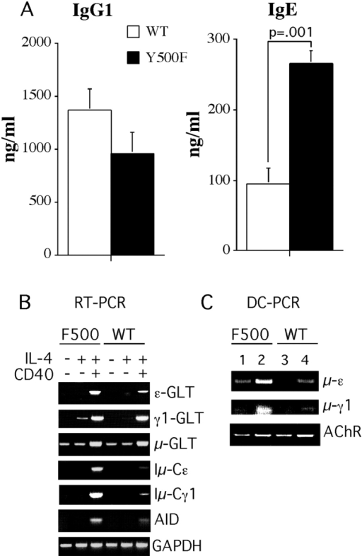 fig6:Targeted Inactivation of the IL-4 Receptor α Chain