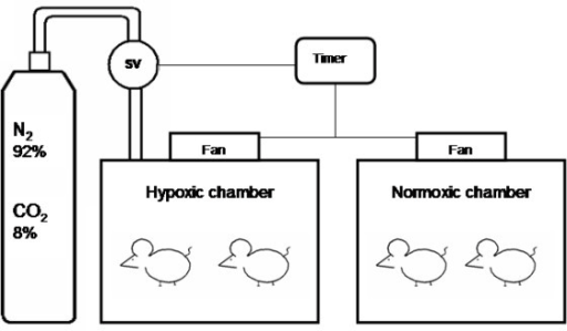 Diagram of the hypoxic and normoxic chambers. Solenoid