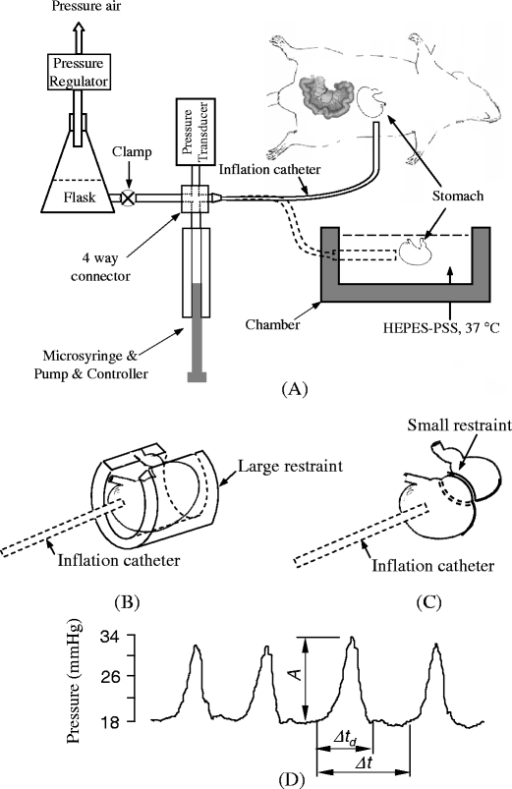 a A schematics of isovolumic myograph and in vivo and e