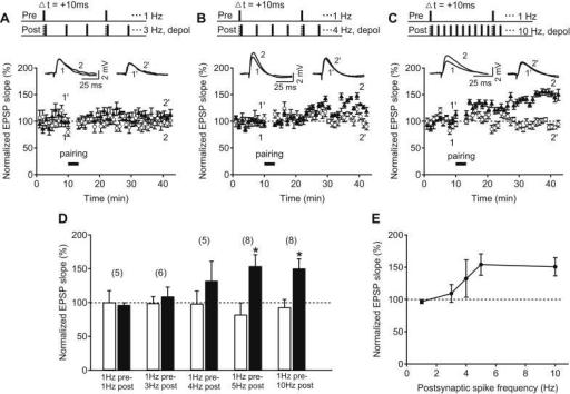Single-spike pairing-induced tLTP at older hippocampal