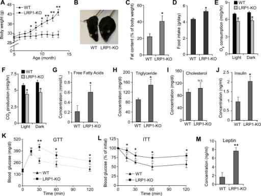 pbio-1000575-g001:Lipoprotein Receptor LRP1 Regulates