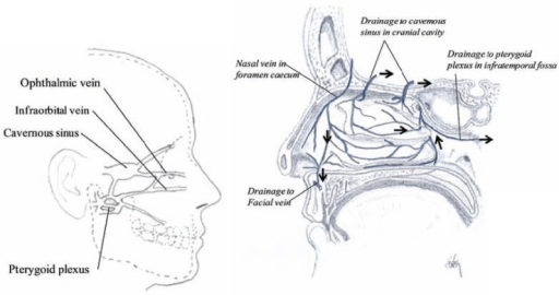 Sagittal section showing the major connections of the v