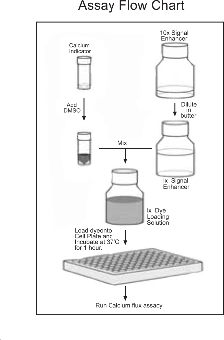 Flow chart of dye-loading solution preparation.
