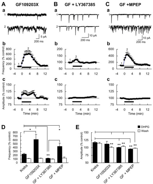 Effects of GF109203X alone and with LY367385 or MPEP on
