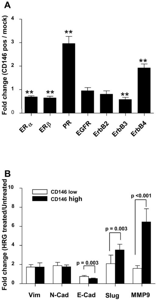CD146 modulation reveals a link with ER, PR and Erb rec