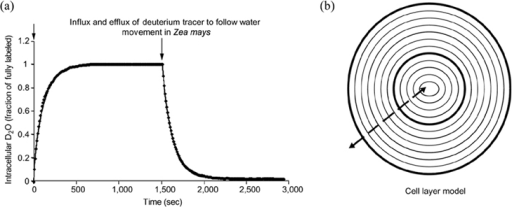 Local Structure Of Liquid Water Through Nmr Parameters