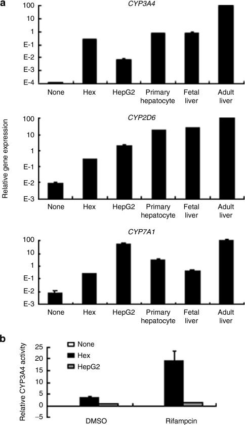 fig6:Efficient Generation of Hepatoblasts From Human ES