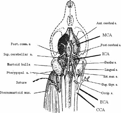 Figure 1:Neurochemical Mechanism of Electroacupuncture