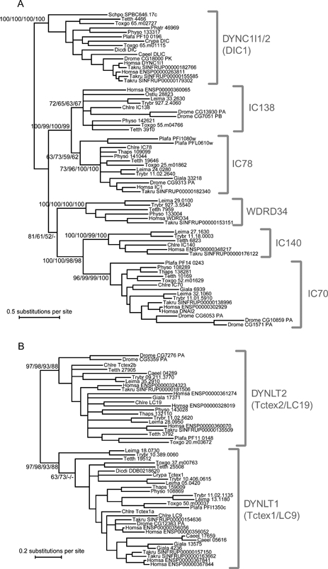fig03:Dyneins Across Eukaryotes: A Comparative Genomic